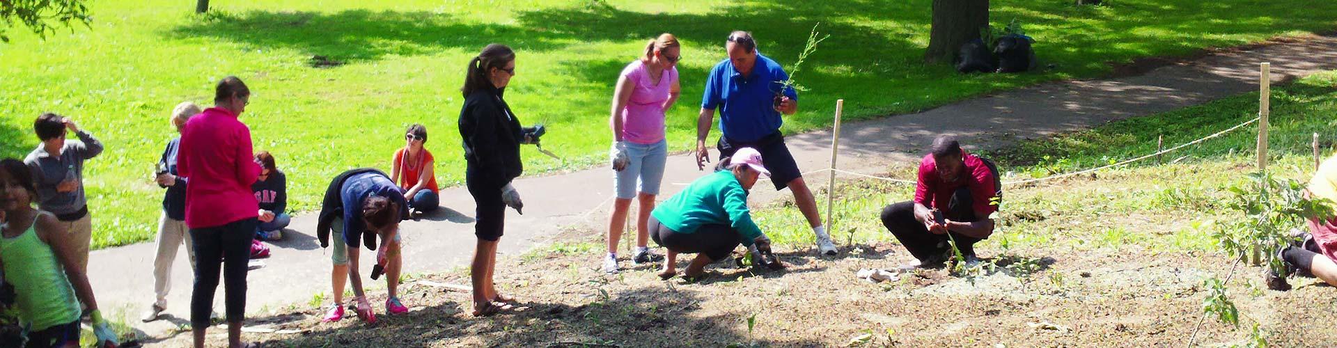 Planting to mitigate flooding